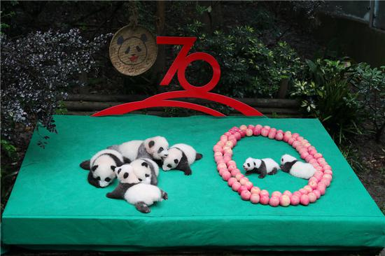 Newborn panda cubs in public for China's 70th anniversary